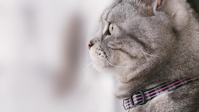 grey-cat-4576x2576_42080