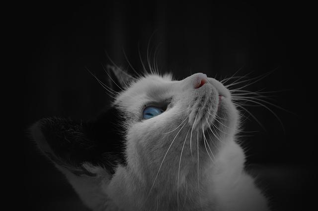 cat-4272x2848_13280