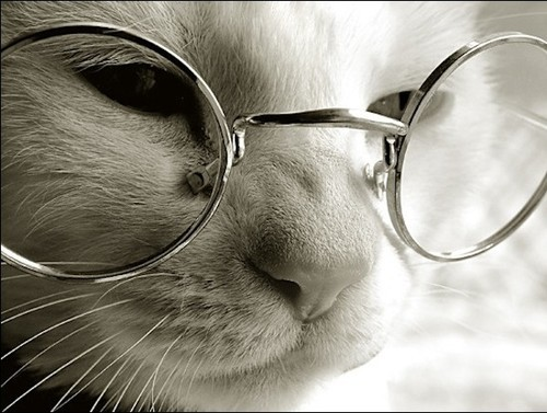 cat,cute,glasses,animal-51658271e008847136ee9e405cc8f72d_h_large