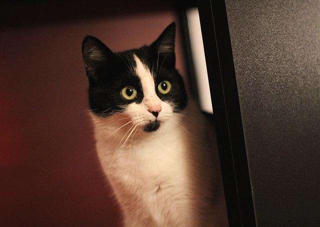 a-cute-cat-3120x2214_51418
