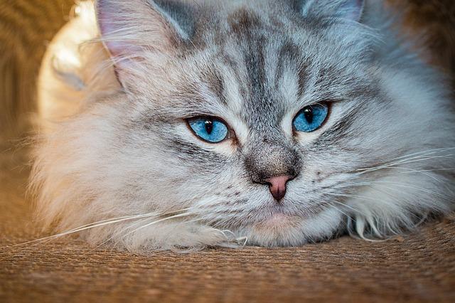 cat-1254523_640