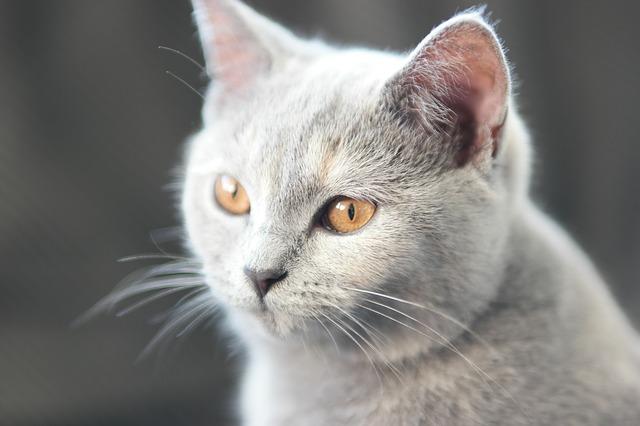 cat-1684612_640