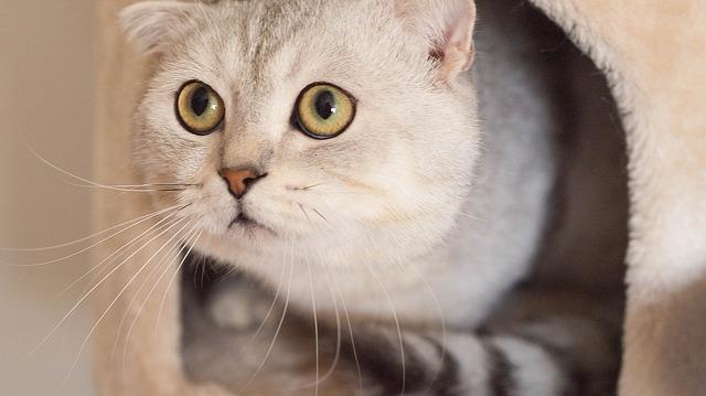 cat-938667_640
